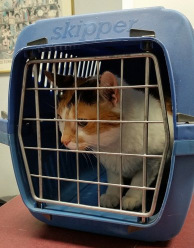 cat, cat carrier, carrier, fear free